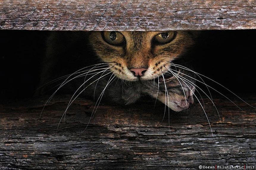 как фотографировать котов
