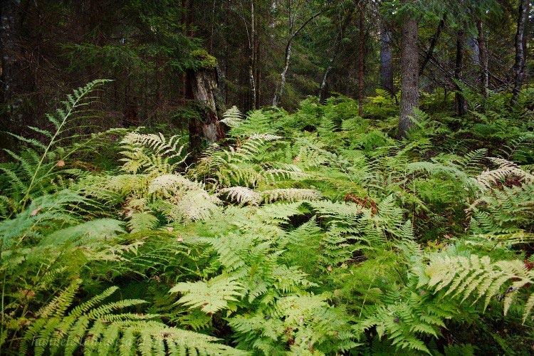 Урок по фотографии: Рекомендации по съемке в лесу