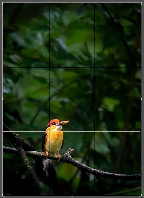 Как делать красивые фотографии